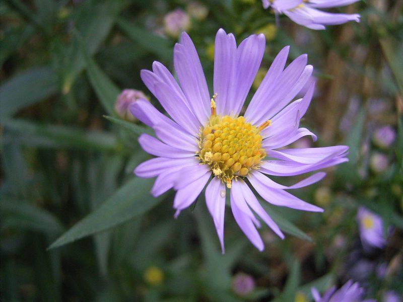 這朵普通的花藏著不為人知的流量秘密
